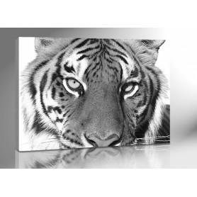 TIGER 140 x 100 cm