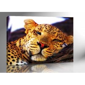 LAZY LEOPARD 140 x 100 cm