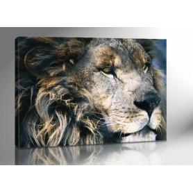 LYON KING 140 x 100 cm