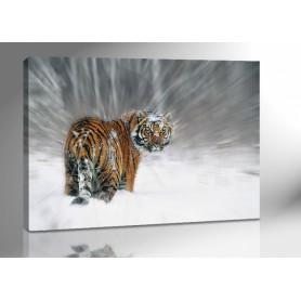 SNOW TIGER 140 x 100 cm