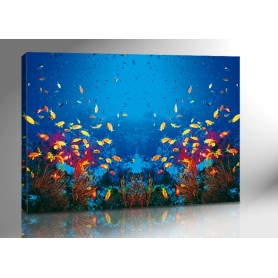 COLOR FISHES 140 x 100 cm