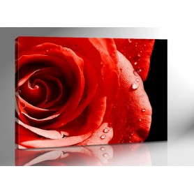 RED ROSE 140 x 100 cm