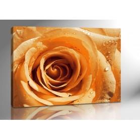 ORANGE ROSE 140 x 100 cm