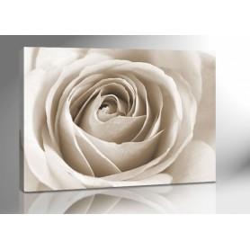 WHITE ROSE 140 x 100 cm
