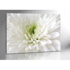 WHITE FLOWER 140 x 100 cm