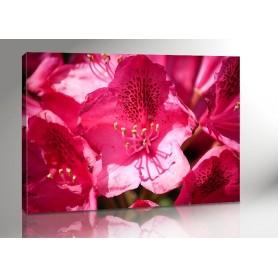 PINK FLOWER 140 x 100 cm