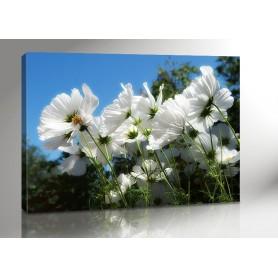 WILD FLOWER 140 x 100 cm