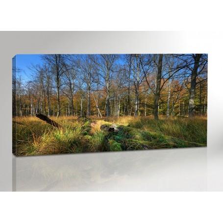 WALD IM DARSS | OSTSEE | FISCHLAND | 200 x 100 cm