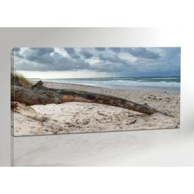 DARSS BAUM | OSTSEE | FISCHLAND | 200 x 100 cm