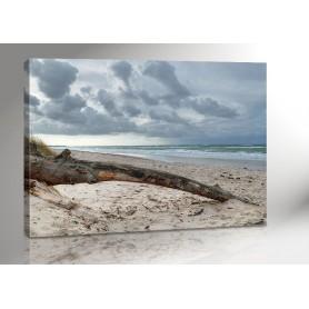 DARSS BAUM | OSTSEE | FISCHLAND | 140 x 100 cm