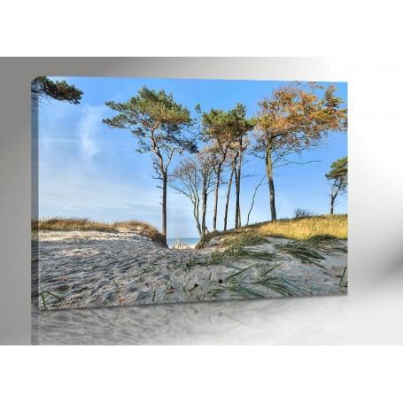 DARSS | WEG ZUM STRAND | OSTSEE | FISCHLAND | 140 x 100 cm